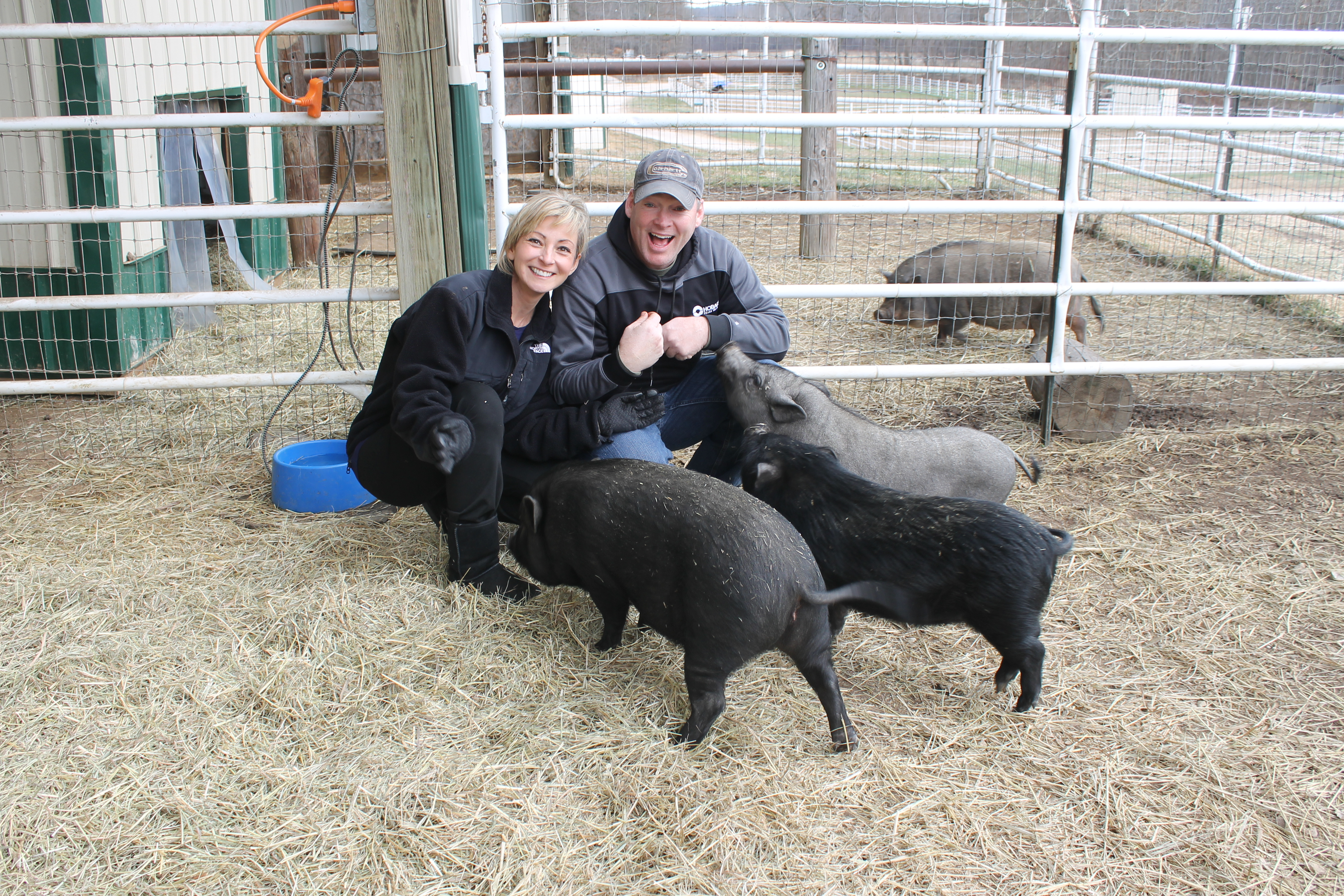 Potbellied pigs are some of the most often surrendered animals to Longmeadow