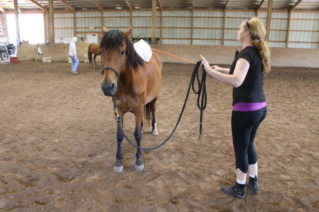 Groundwork Sessions at Longmeadow Rescue Ranch