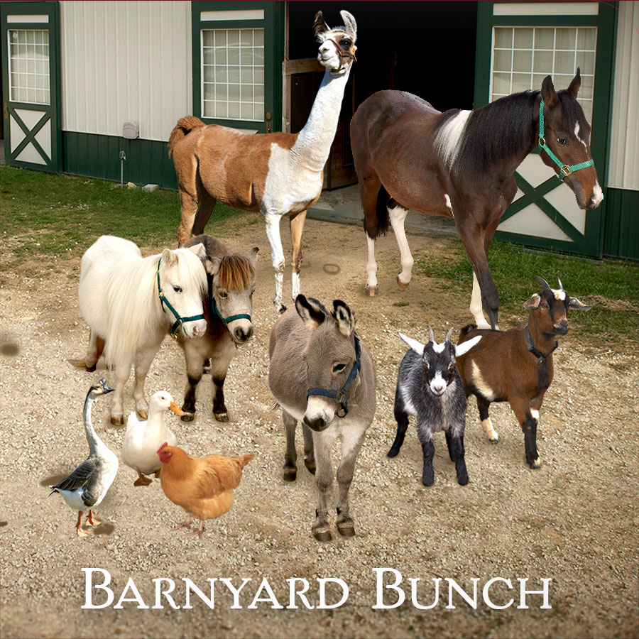 Barnyard Bunch at Longmeadow Rescue Ranch