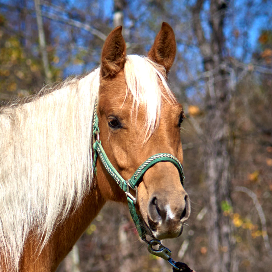 Tumbleweed the horse is available for sponsorship at Longmeadow Rescue Ranch