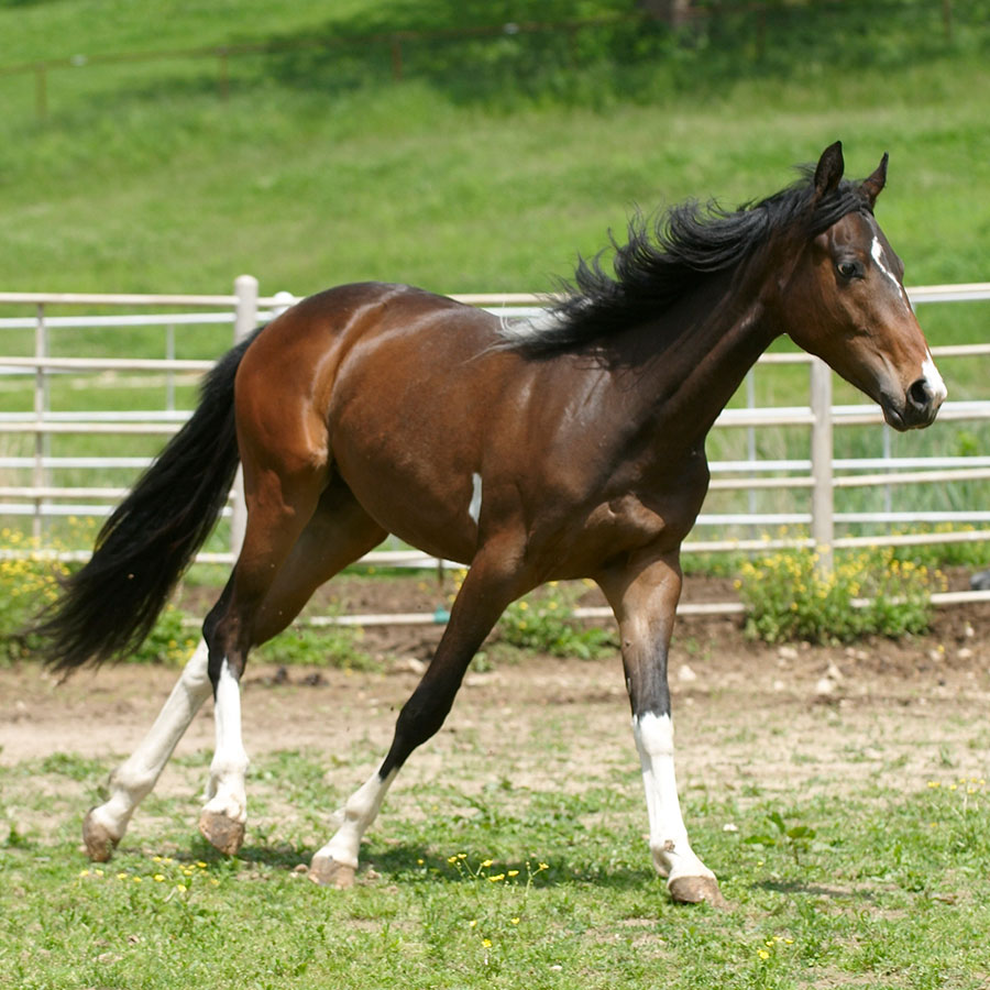 Twist of Fate is a horse available for sponsorship at Longmeadow Rescue Ranch