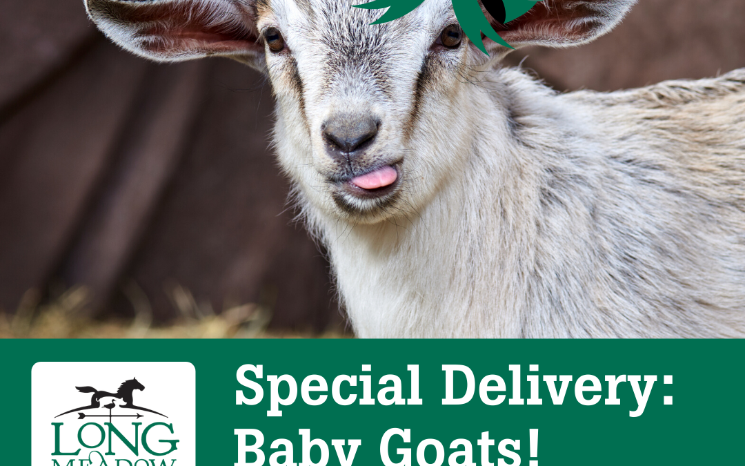 On-Demand Baby Goat Deliveries Now Available from Longmeadow Rescue Ranch